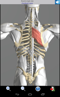 Visual-Muscles-3D-4